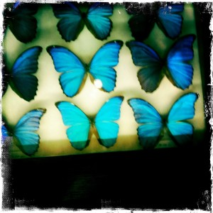 paris shopping deyrolle butterflies neon
