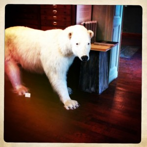 Paris taxidermy deyrolle shopping animals polar bear