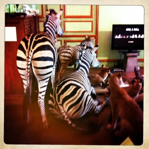 Paris taxidermy deyrolle shopping animals zebra