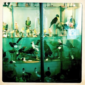Paris taxidermy deyrolle shopping animals birds