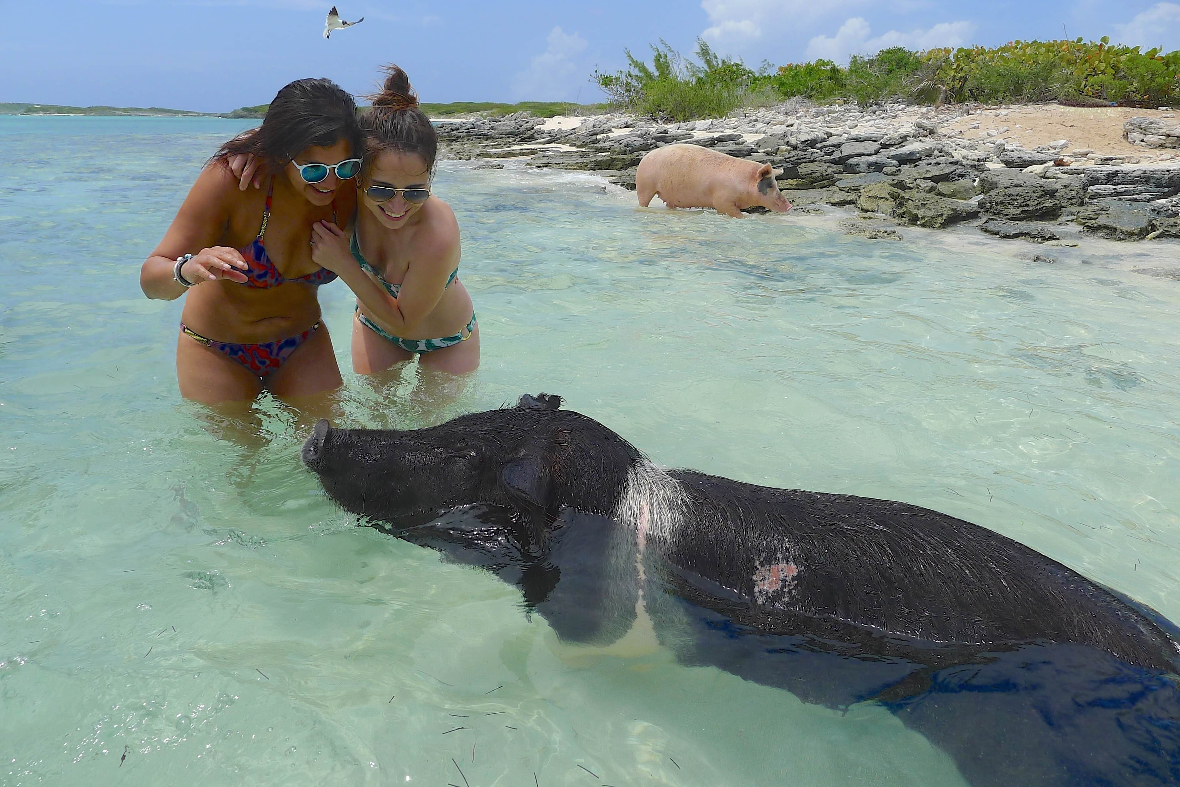 Exuma Swim With The Pigs In The Bahamas On A Full Day - #Summer