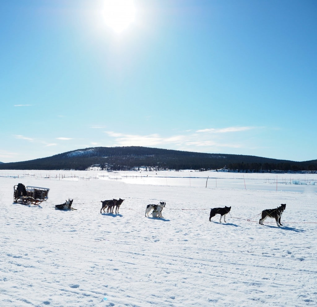 Dog Sledding Ice Hotel Sweden The Style Traveller