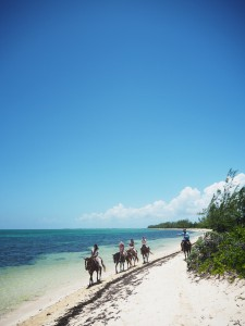 cayman Islands beach horse riding