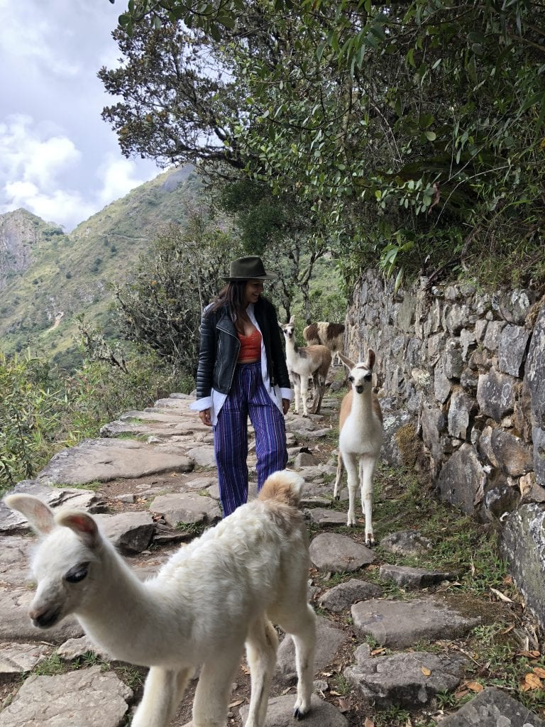 Best luxury hotel in Machu Picchu Belmond Sanctuary Lodge Llamas Bonnie Rakhit