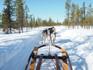 Dog Sledding Ice Hotel The Style Traveller